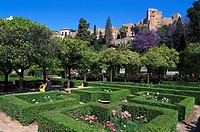 Park and fort Alcazaba in the sunlight, Costa del Sol, Malaga, Andalusia, Spain, Europe