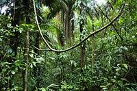 Lowland rainforest, Braulio Carrillo National park, Costa Rica, Central America