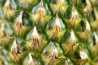 Fruit Pineapple close up