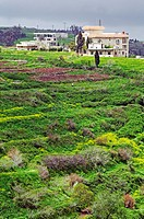 Flowering landscape with terraces at Homs, Syria, Middle East, Asia