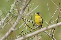 Bird, Sink_snake, defecate_fat, Ilha do Mel, Encantadas, Paraná, Brazil
