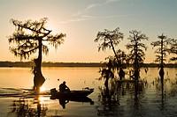 Cyrpress Island, Lake Martin, Louisiana  Sunset