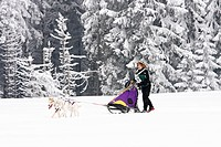 2-dog team of Siberian Huskies, Winterberg Sled Dog Races 2010, Sauerland, North Rhine-Westphalia, Germany, Europe