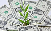 Plant, dollar bills, symbolic image for a successful investment, growing returns