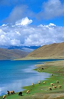Lake Yamdrok Tso, Tsang province, Tibet, China