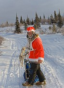 Santa Claus on a dog sled, mushing, dog sled race near Whitehorse, Yukon Territory, Canada