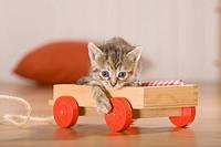 Kittens in carts, kitten in hay trailer