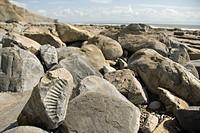 Ammonite fossil, beach, coast, Nash Point, Glamorgan Heritage Coast, South Wales, Wales, United Kingdom, Europe