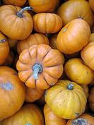 A box of mini pumpkins at a Farmer´s Market in Brooklyn, NY