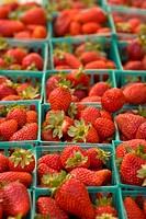 Organic locally grown strawberries at farmers´ market in Nevada City, California
