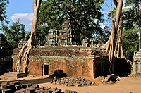Cambodia, Siem Reap Province, Angkor classified World Heritage by UNESCO, the temple of Ta Prohm, built in 1186 by King Jayavarman VII, the temple wal...