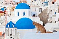 Europe, Greece, Cyclades, Thira, Santorini, Oia, Cat sitting on wall