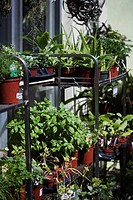 Plants on display in a plant nursery, Miami Beach, Florida, USA