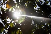 Sunbeams shining through trees in a forest, John Pennekamp Coral Reef State Park, Key Largo, Florida Keys, Florida, USA
