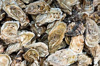 Pacific cupped oyster