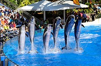 Sea World Adventure Theme Park Orlando Florida Dolphin show
