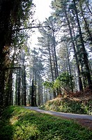 Matxitxako forest near of Bermeo village  Biscay  Basque Country, Spain  Europe