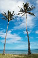 Two palm trees on Oahu, Hawaii, USA