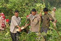 Maoist People's Liberation Army PLA personnels clearing the forest to make some room to build a camp at the new cantonment sites of Shaktikhor VDC of ...