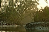 A canal iin the Sundarbans, a UNESCO World Heritage Site and a wildlife sanctuary The largest littoral mangrove forest in the world, it covers an area...