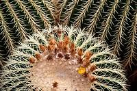 Guatiza, Cesar Manrique, Spain, Europe, Jardin de Cactus, cacti, cactus garden, cactus, Canary islands, isle, Lanzarote, plant, place of interest, suc...