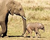 Mother and Baby African Elephant - Masai Mara National Reserve, Kenya