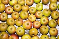 Apples arranged on paper