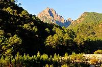 Col de Bavella, Alta Rocca Region, Corse_du_Sud, Corsica, France