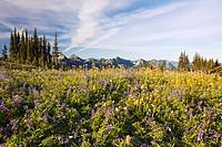 tatoosh mountains in paradise park in mt. rainier national park, washington, united states of america