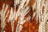 tall grass, portland, oregon, united states of america