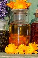 Herb, oil, with, Marigold, Calendula, officinalis,