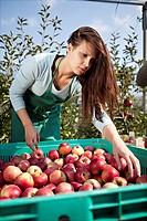 Croatia, Baranja, Young woman picking apples