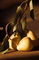 Orchard Pears with Leaves