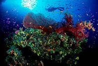 Silhouette of a scuba diver swimming underwater