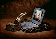 Close_up of a snake with a laptop