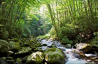 Bridge over Big Creek, Great Smoky Mountains National Park, North Carolina, USA