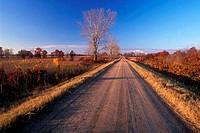Dirt road passing through a landscape, Prairie´s Edge Wildlife Drive, Sherburne National Wildlife Refuge, Minnesota, USA