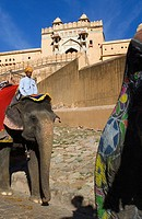 Elephants in Amber fort,Amber, Rajasthan, India
