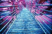 Bamboo Foot Bridge