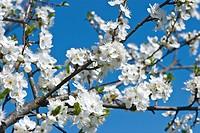 wonderful flowering tree