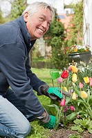Older man cutting flowers in backyard