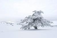 Winter Scenics