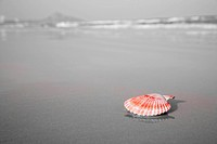 Red shell laying on the beach
