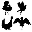 vector silhouette of the birds on white background