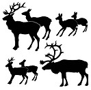 vector silhouette of the deers on white background