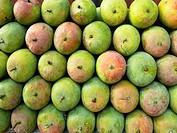 Fruits, Alphanso Mangoes, Hapus for sell at market, Ratnagiri, Maharashtra, India