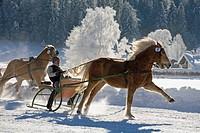 Germany, Bavaria, Upper Bavaria, Rottach_Egern, Man at horsedrawn sleigh racing