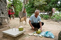 CAMBODIA. Man cutting coconut for drinking  CRS supports a local NGO called CEDAC  Their integrated development approach is raising many farmers out o...