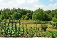 community garden in Heerlen, in Limburg province of the Netherlands