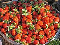 Strawberries, Fragaria x ananas for sale, Mahabaleshwar, Satara, Maharashtra, India
